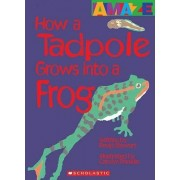 How a Tadpole Grows Into a Frog by David Stewart