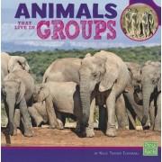 Animals That Live in Groups by Kelsi Turner Tjernagel