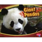 Giant Pandas by Lyn A. Sirota