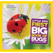 Little Kids First Big Book of Bugs by Catherine D Hughes