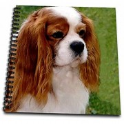 3dRose db_980_2 Cavalier King Charles Spaniels Memory Book 12 by 12-Inch