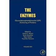 Glycosylphosphatidylinositol (GPI) Anchoring of Proteins: Volume 26 by Anant Kumar Menon