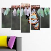 Декоративен панел за стена с пъстроцветна пеперуда и буби Vivid Home