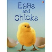 Eggs and Chicks by Fiona Patchett