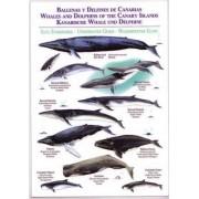 Whales and Dolphins of the Canary Islands / Ballenas y Delfines de Canarias / Kanarische Whale Und Delphine by Jose Manuel Moreno