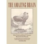 The Amazing Brain by Robert E. Ornstein