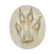 Red Fox Negative Footprint (7.1x6cm)