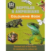 Bear Grylls Colouring Books: Reptiles by Bear Grylls