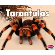 Tarantulas by Gail Saunders-Smith