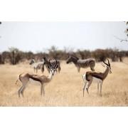AFRIQUE DU SUD: CAP TOWN