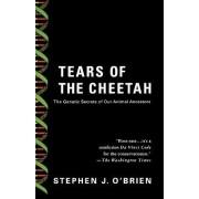 Tears of the Cheetah by Stephen J. O'Brien
