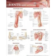 Joints of the Upper Extremities Anatomical Chart by Anatomical Chart Company