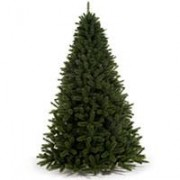 Novogodišnja Jelka Siberian Spruce Visine 215 cm