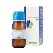 Ficus carica gemme macerato glicerico 60 ml