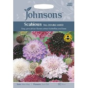 Johnsons UK/JO/FL Scabious Tall Double Mixed
