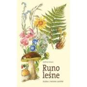 Runo leśne. Fauna i flora lasów