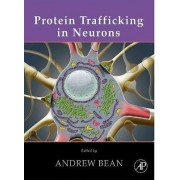Protein Trafficking in Neurons by Andrew J. Bean