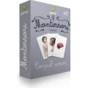 Montessori - Vocabular corpul uman