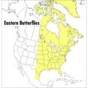 Field Guide to Eastern Butterflies by Paul A. Opler
