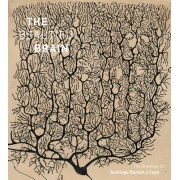 The Beautiful Brain: The Drawings of Ramon y Cajal