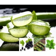 Ceai de plante Aloe Vera si Capsuni