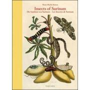 Insects of Surinam va(Dr. Katharina Schmidt-Loske)