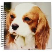 3dRose db_46182_2 Spaniel Cavalier King Charles Spaniel-Memory Book 12 by 12-Inch