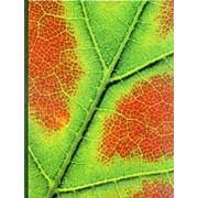Plant Physiology by Frank Salisbury