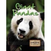 Giant Pandas by Tom Greve
