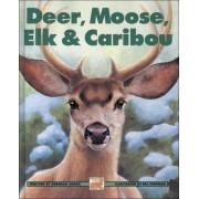 Deer, Moose, Elk and Caribou by Deborah Hodge