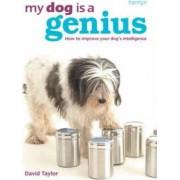 My Dog is a Genius by David Taylor