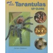Tarantulas Up Close by Carmen Bredeson
