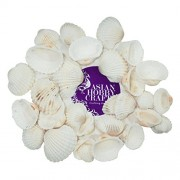 AsianHobbyCrafts Natural Sea Shells : 150g pack : Type – Cockle Shell