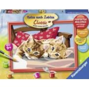 Pictura Pe Numere Doua Pisici