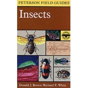 Field Guide to Insects by Donald J. Borror