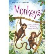 Monkeys by Sarah Courtauld