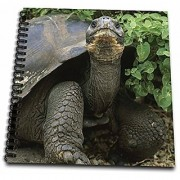3dRose db_86190_1 Giant Tortoise Galapagos Islands Ecuador - SA07 KSC0011 - Kevin Schafer - Drawing Book 8 by 8-Inch