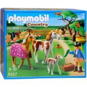 Country - Paddock met paardenfamilie