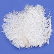 10Pcs White Ostrich Feathers 6.7-9 Inch