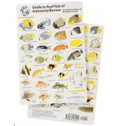Guide to Reef Fish of Indonesia/Borneo