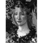 Botticelli by Lionello Venturi