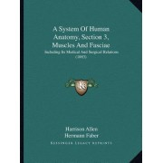 A System of Human Anatomy, Section 3, Muscles and Fasciae by Harrison Allen