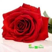 Ulei de Parfum de Trandafir 100% 10 ml