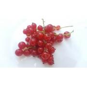 Červená ríbezla TRENT stromčeková
