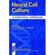 Neural Cell Culture by James Cohen