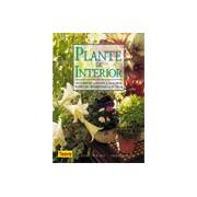 Plante de interior - Ghid pentru eleferea si ingrijirea plantelor de interior.