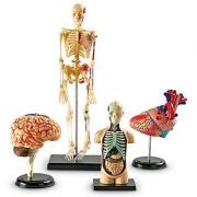 Learning Resources Anatomy Models Bundle Set