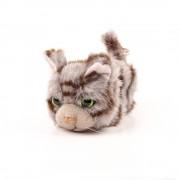 Pisici de plus Nr. 13 - Norvegiana de padure Tammy