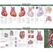 Anatomical Chart Company's Illustrated Pocket Anatomy: Anatomy of The Heart Study Guide by Anatomical Chart Company