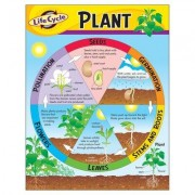 Trend Enterprises Life Cycle of A Plant Chart (Set of 3) T-38179